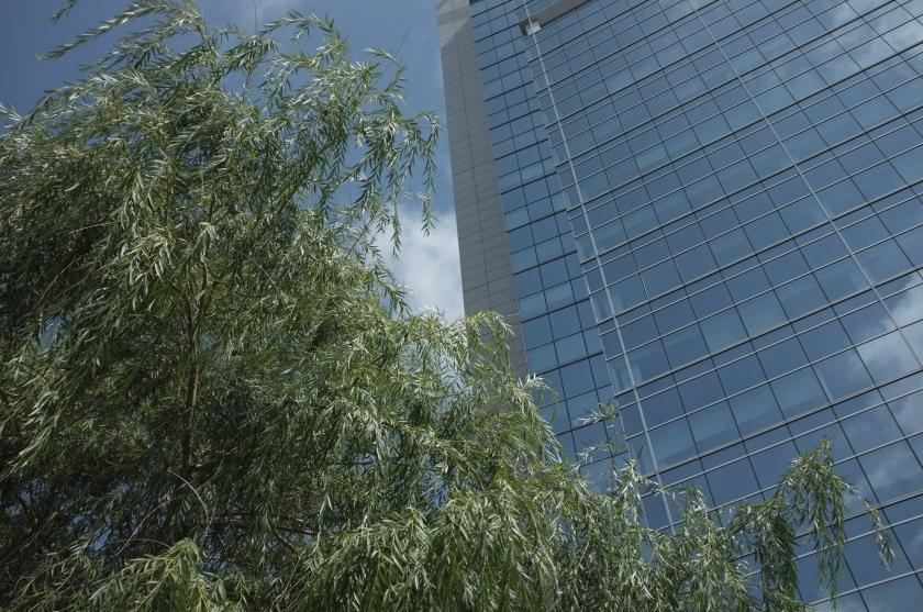 Eastern Manner Tree Building DT JC